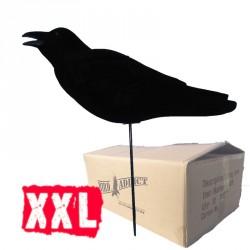 Carton de 6 corbeaux super magnum