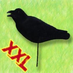 AGRESSIVE CROW XXL