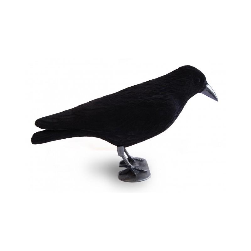 chasse corbeau blette par 12. Black Bedroom Furniture Sets. Home Design Ideas