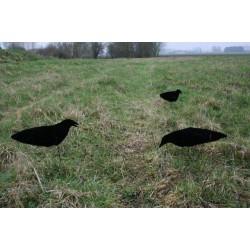 Aéro-blette corbeau