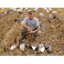 Aéro-blette oie rieuse / cendrée mangeuse