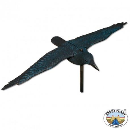 corbeau ailes déployées